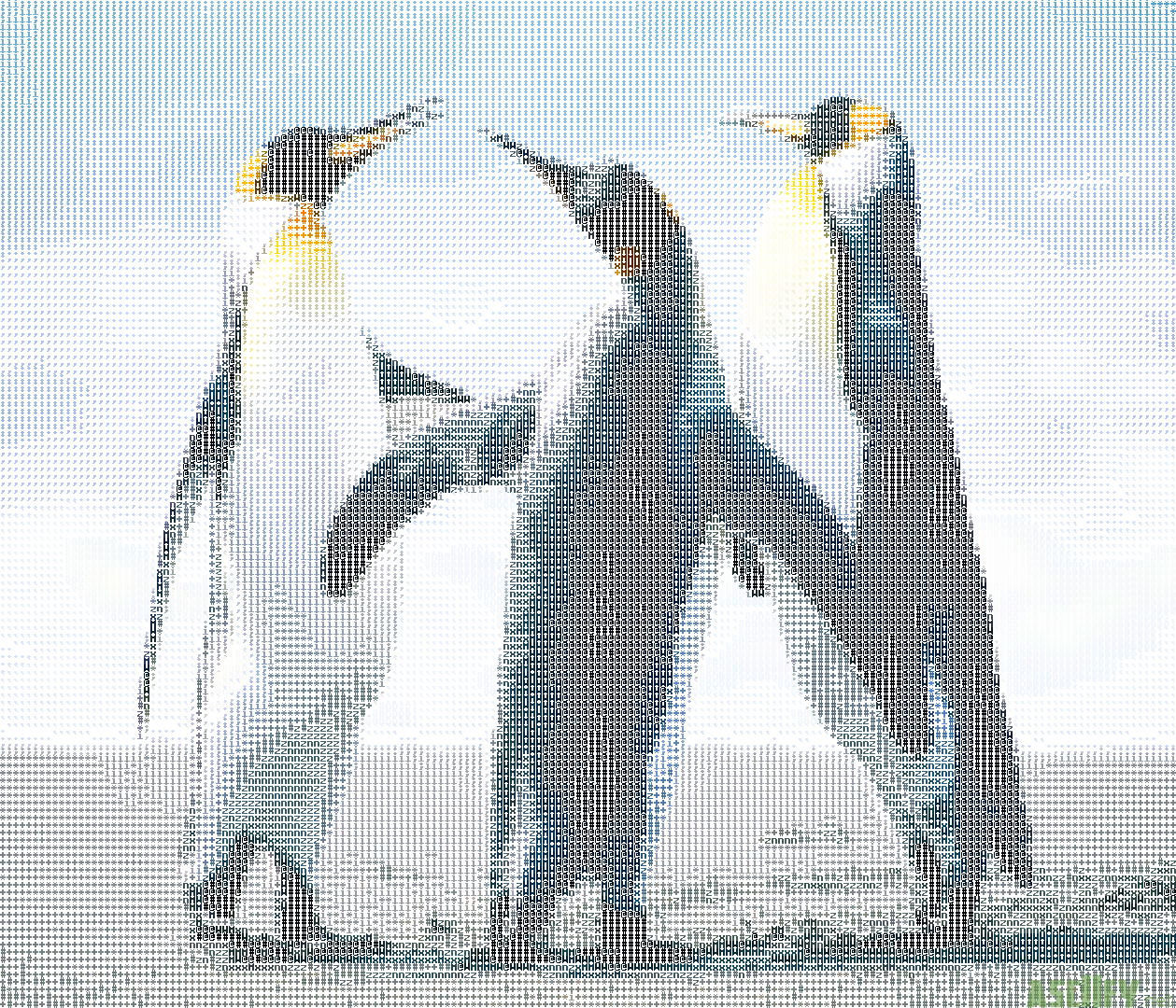 Three pinguins