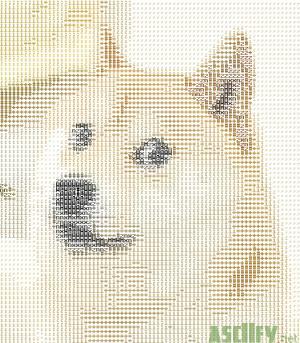 doge2
