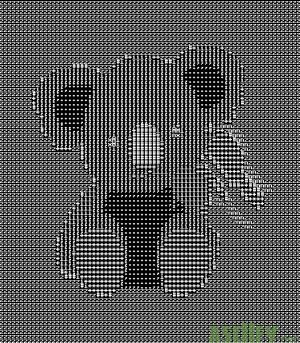 Gay Koala