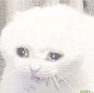 Crycat