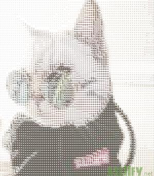 Cat Fachero