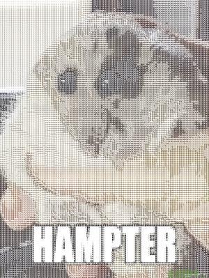 hampter