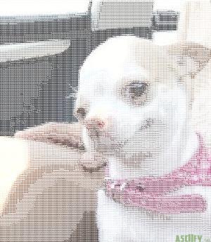 dog230499