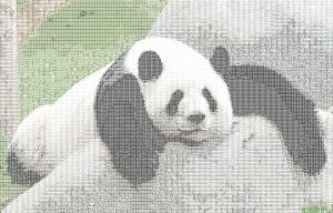 PANDA!PANDA!PANDAAA!