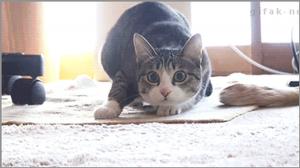 Cat preparing to jump