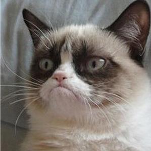 Grumpy cat Tard